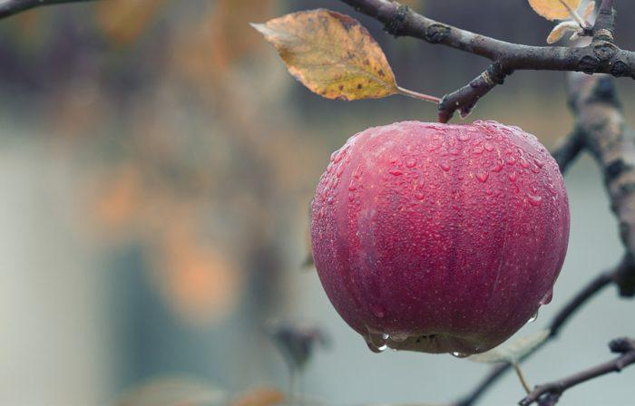 Ilgtspējīga, veselīga lauksaimniecība
